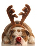 with_reindeer_antlers_red_nose_puppy_168901